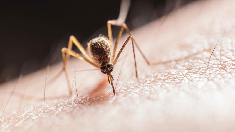 Malaria: Beugen Sie vor!