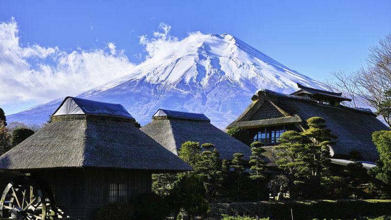 Japanische Enzephalitis - eine gefährliche Viruserkrankung